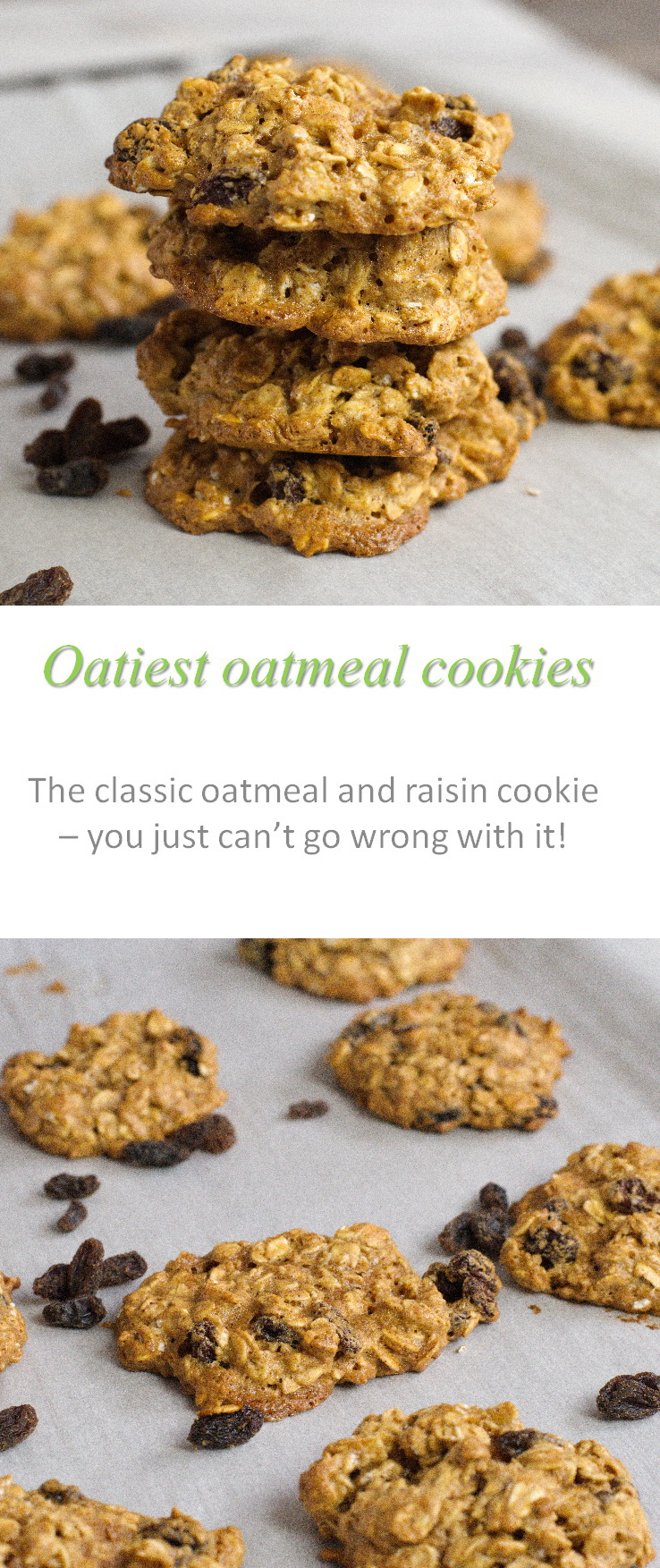 These oatiest oatmeal cookies are full of raisins and so yummy - can't go wrong with the classic combo of oatmeal raisin cookies! #oatmeal